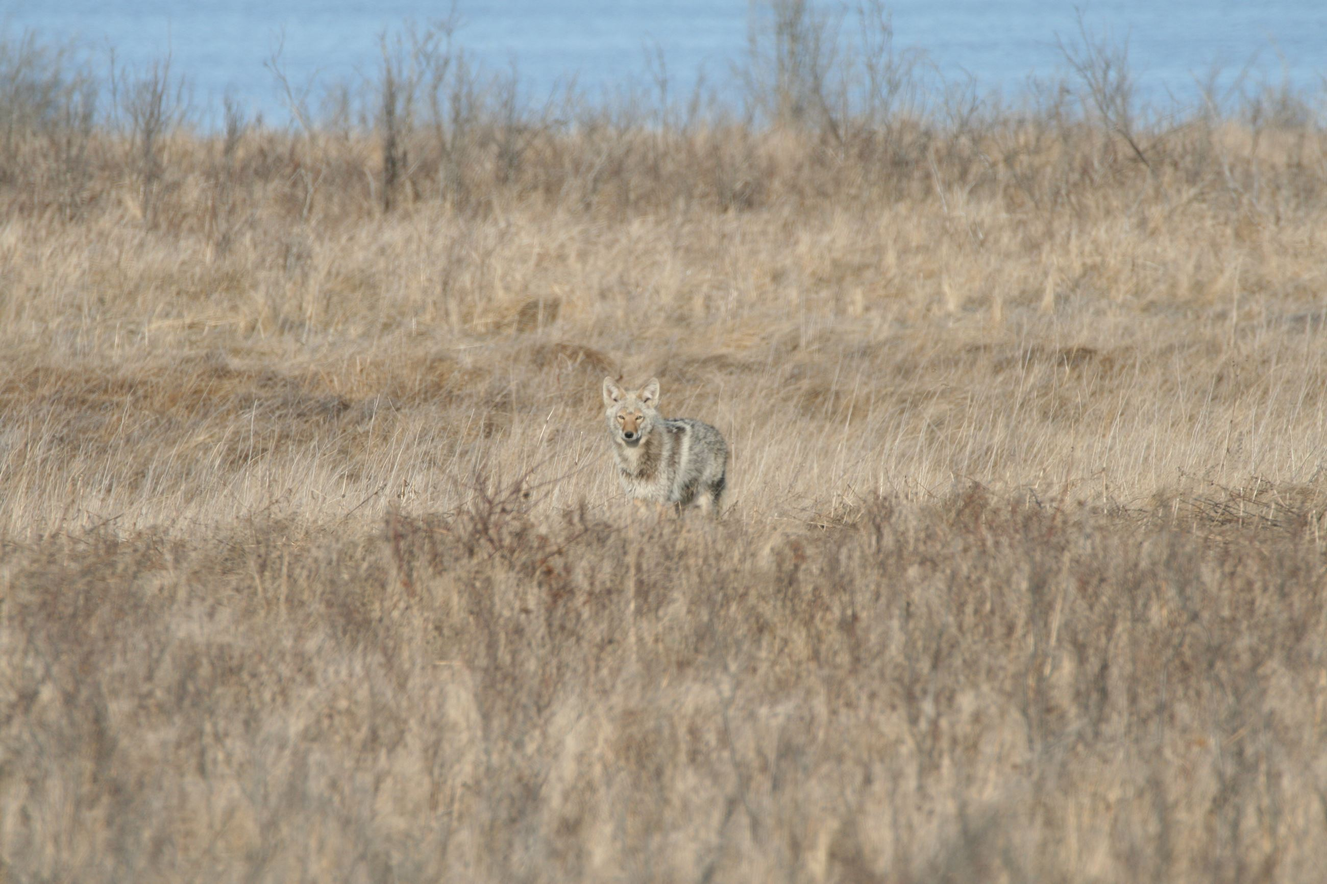 Photo of Wildlife